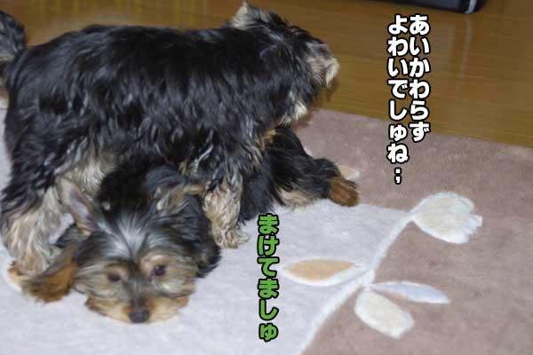 0220kokochoko4